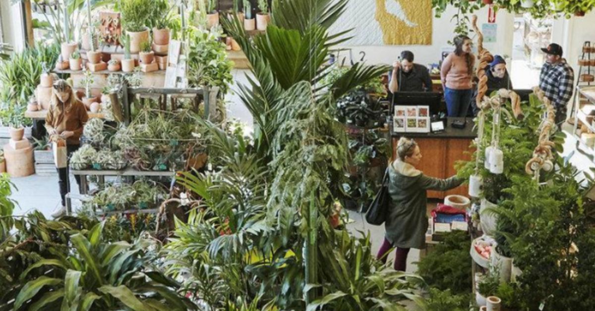 dans une boutique de plantes