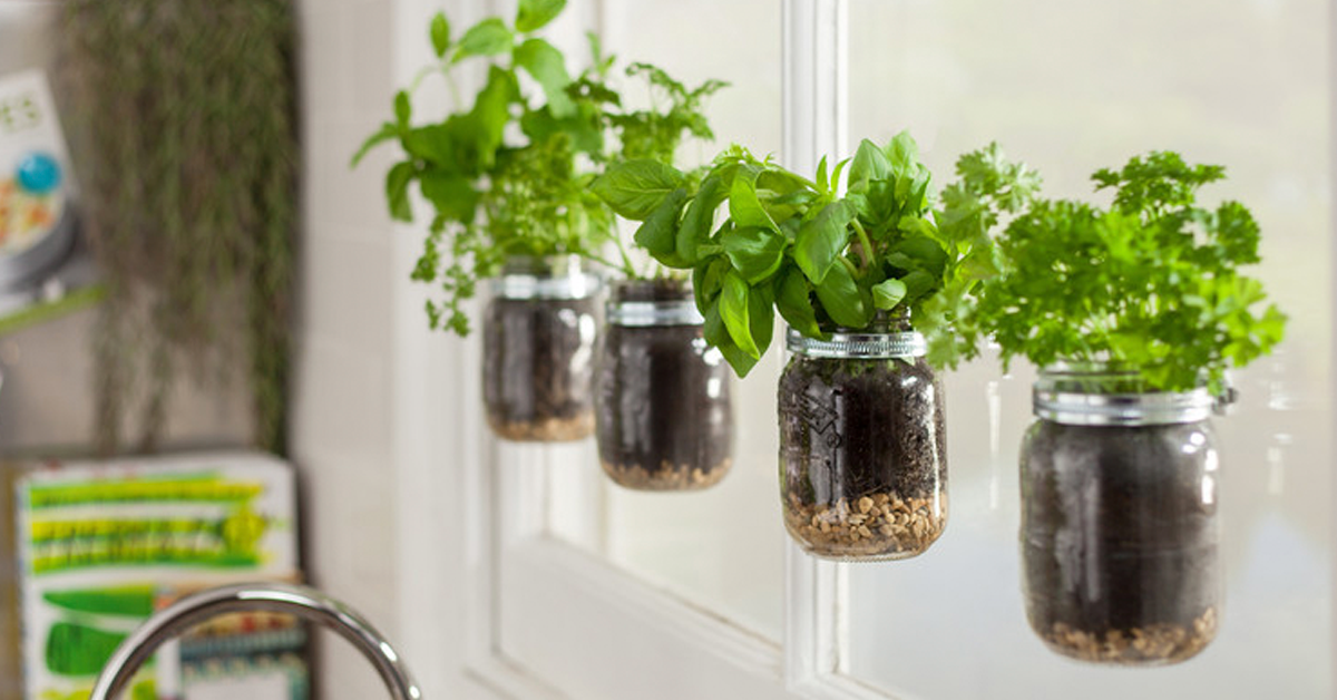 herb plant jars stuck to window with Sugru