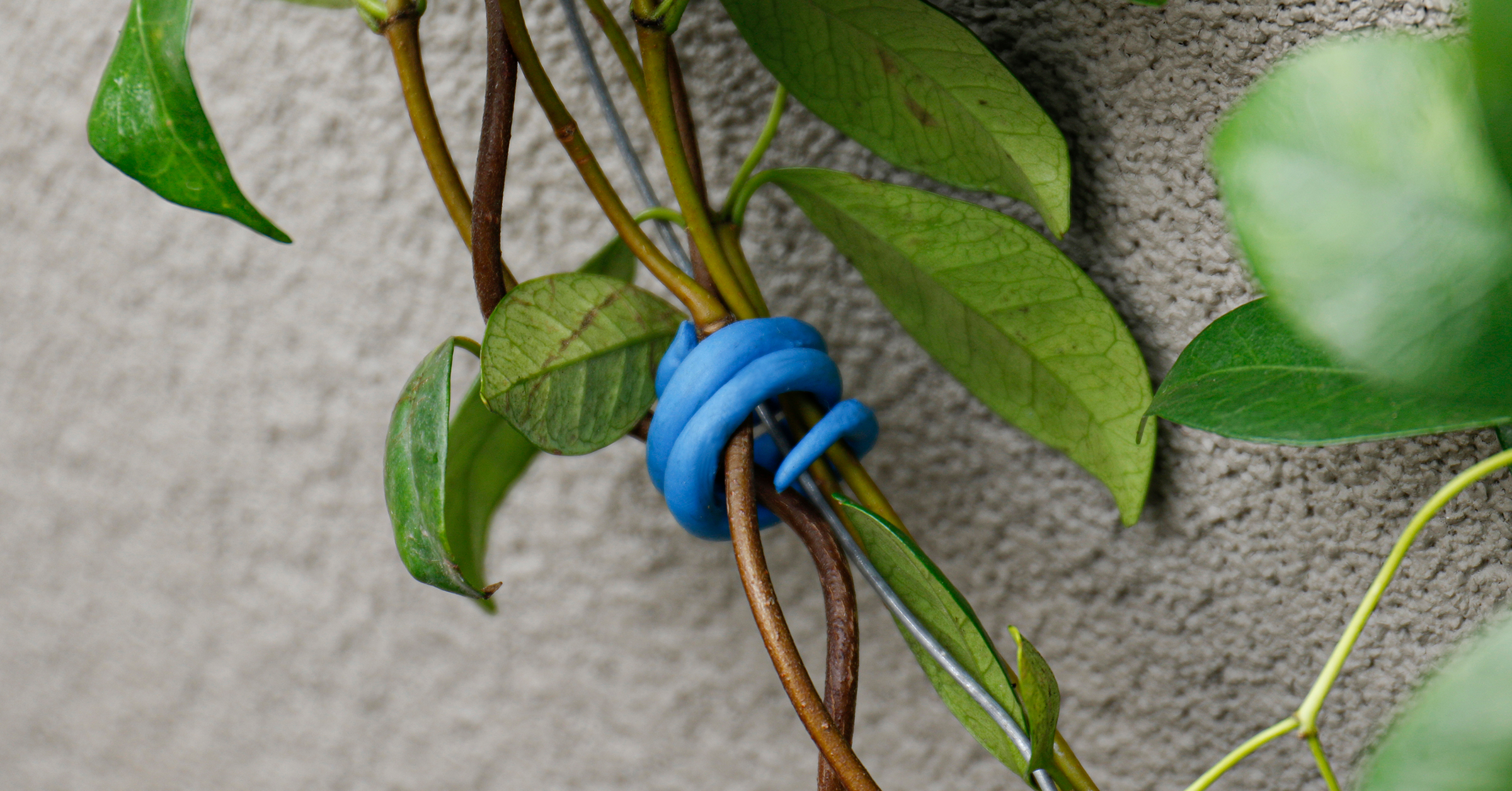 Sugru plant tie holding stems together